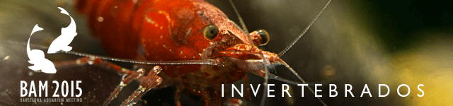 banner invertebrados - Barcelona Aquarium Meeting 2015